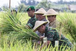 TNI Turunkan Babinsa Untuk Swasembada (Suherman – Hello Borneo)