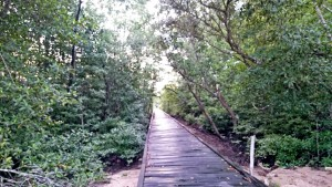 Jika Tak Dirusak Manggrove Bisa Jadi Objek Wisata (L Gustian – Hello Borneo)