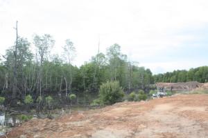 Hutan mangrove  terancam keberadaannya seiring dengan pelaksanaan pembangunan di wilayah Kabupaten Penajam Paser Utara (Gusti - Heloo Borneo)