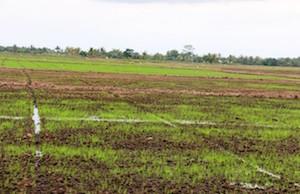 Lahan pertanian di wilayah Kabupaten Babulu, Kabupaten Penajam Paser Utara (Subur Priono - Humas Setkab Penajam Paser Utara)