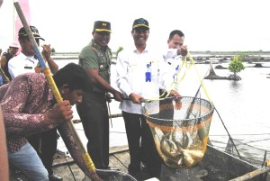 Panen raya ikan bandeng di Desa Babulu Laut, Kecamatan Babulu, Kabuaten Penajam Paser Utara (AH Ari B - Hello Borneo)