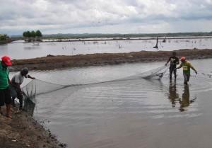 Tambak ikan bandeng di Desa Babulu Laut, Kecamatan Babulu, Kabupaten Penajam Paser Utara (AH Ari B - Hello Borneo)
