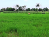 Lahan Pertanian di PPU