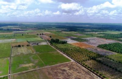 Foto Drone Sawah di Kecamatan Babulu